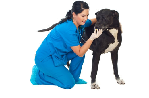 Does-Your-Pet-Have-a-Hard-Time-Taking-Their-Medicine